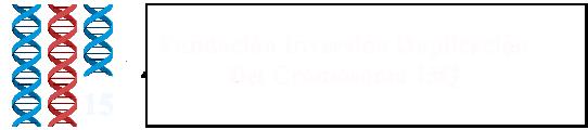 Fundación Inversión Duplicación del Cromosoma 15Q